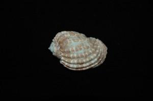 DSC 0730